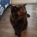 原點鮮食貓餐包-鮪魚3oz_200405_0016.jpg