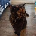 原點鮮食貓餐包-鮪魚3oz_200405_0017.jpg