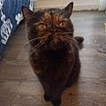 原點鮮食貓餐包-鮪魚3oz_200405_0023.jpg