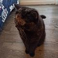 原點鮮食貓餐包-鮪魚3oz_200405_0026.jpg