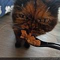 原點鮮食貓餐包-鮪魚3oz_200405_0030.jpg