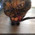 原點鮮食貓餐包-鮪魚3oz_200405_0034.jpg