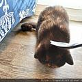 原點鮮食貓餐包-鮪魚3oz_200405_0037.jpg