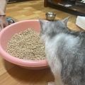 凱沃 天然木活性碳凝結貓砂_200427_0002.jpg