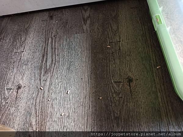 凱沃天然木凝結貓砂6L_200502_0006.jpg