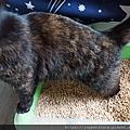 凱沃天然木凝結貓砂6L_200502_0009.jpg
