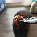 狩獵者主食貓罐-雞肉200g_200529_0009.jpg