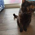 狩獵者主食貓罐-雞肉200g_200529_0015.jpg