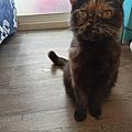 狩獵者主食貓罐-雞肉200g_200529_0016.jpg
