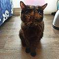 狩獵者主食貓罐-雞肉200g_200529_0023.jpg