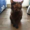 狩獵者主食貓罐-雞肉200g_200529_0022.jpg