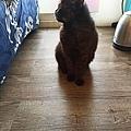狩獵者主食貓罐-雞肉200g_200529_0025.jpg
