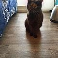 狩獵者主食貓罐-雞肉200g_200529_0024.jpg