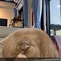 波菲特PURRFACT鴨肉田雞_200608_0020.jpg