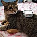 汪喵銀養罐-鰹魚_200706_3.jpg