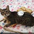 汪喵銀養罐-鰹魚_200706_5.jpg