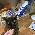 貓咪派對 粉紅小黃瓜_200710_5.jpg
