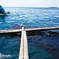 與鯨鯊共遊_180914_0021.jpg
