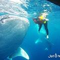 與鯨鯊共遊_180913_0007.jpg