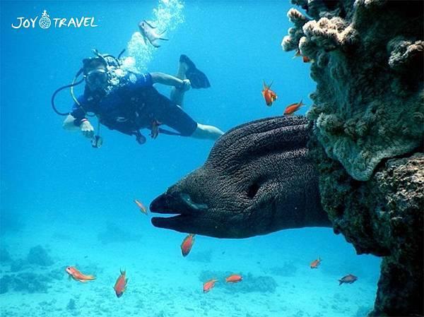 红海鱼9.jpg