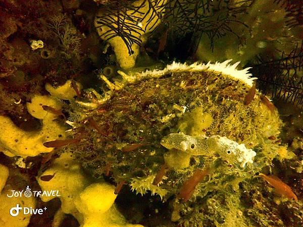 明多洛潛水團照片區~歡迎大家領取_181217_0028.jpg