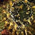 明多洛潛水團照片區~歡迎大家領取_181217_0044.jpg