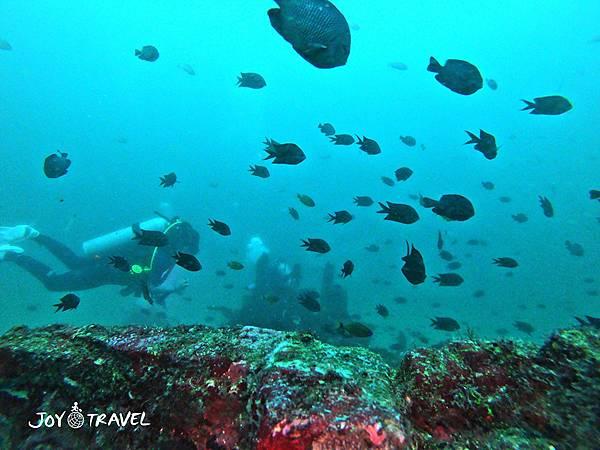 明多洛潛水團照片區~歡迎大家領取_181217_0051.jpg