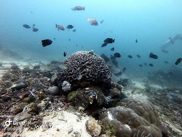 明多洛潛水團照片區~歡迎大家領取_181217_0087.jpg