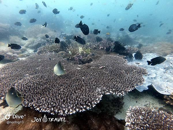 明多洛潛水團照片區~歡迎大家領取_181217_0083.jpg