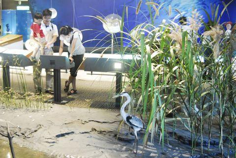 (蘭陽博物館)河口濕地生態.JPG
