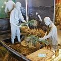 (蘭陽博物館)宜蘭地區特有的稻穀tn_收割方式.JPG