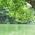 tn_湖景9.JPG