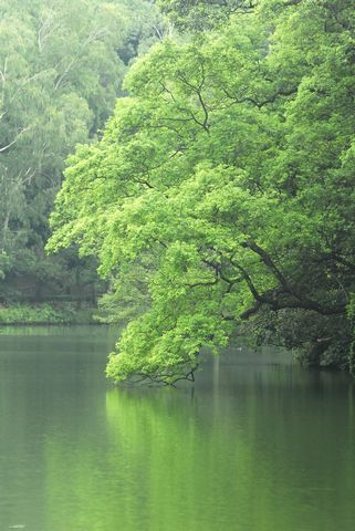 tn_湖景1.JPG