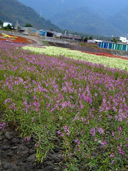 20091205-06-台東恩典家 (47).JPG