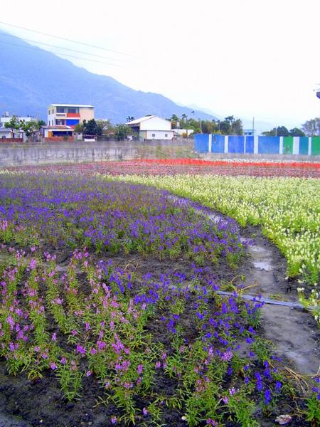 20091205-06-台東恩典家 (60).JPG