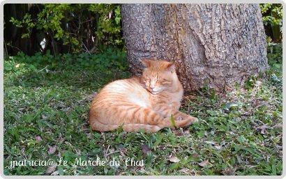 st-cat1.jpg