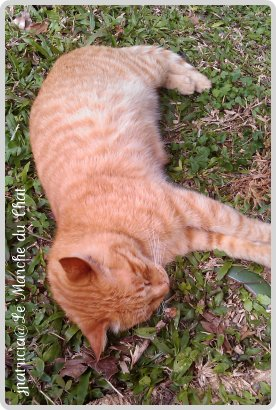 st-cat2.jpg