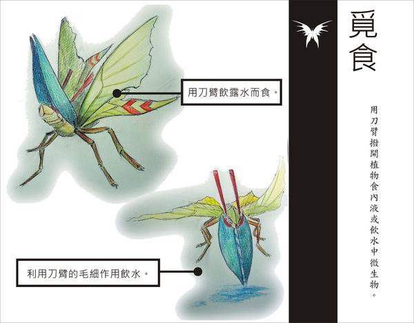 刺蝶 - 14.jpg