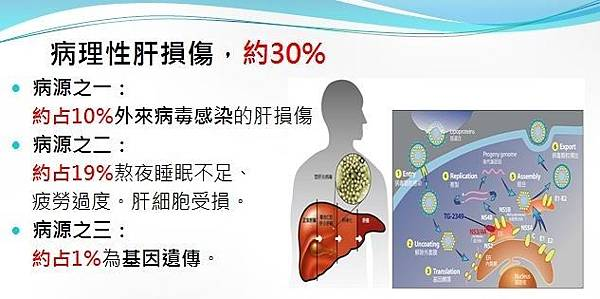 健安丰久仙預防病理性肝損傷造成身體危害