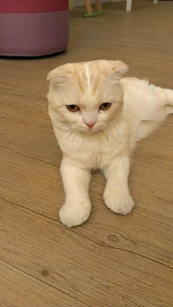 咕嚕貓咖啡_9719