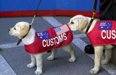customdogs.jpg