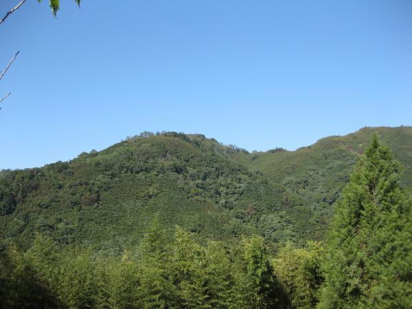 lavendar forest 049.jpg