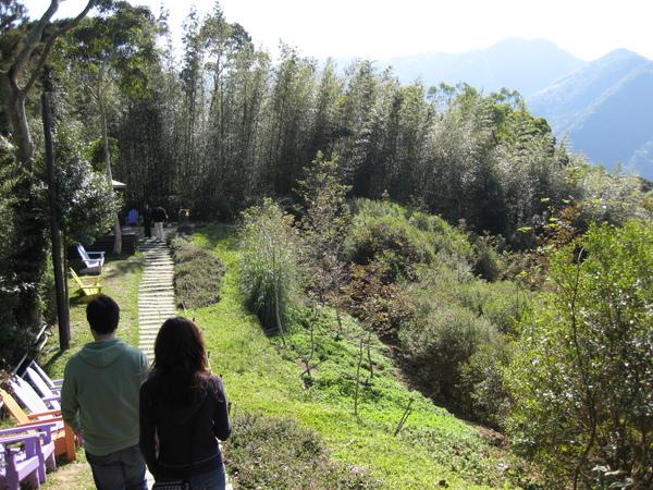 lavendar forest 075.jpg