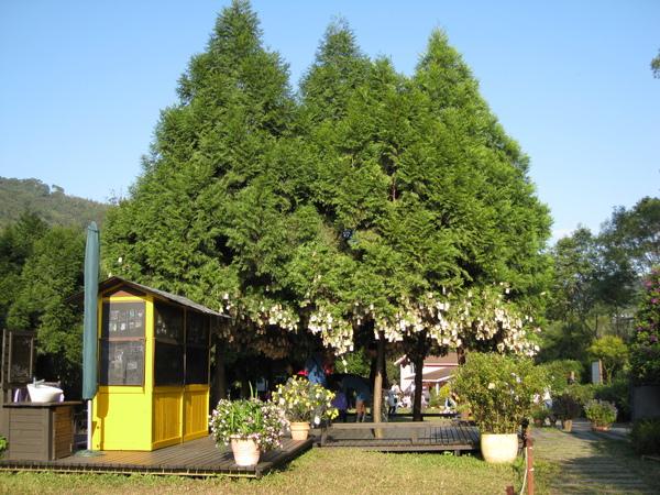 lavendar forest 161.jpg