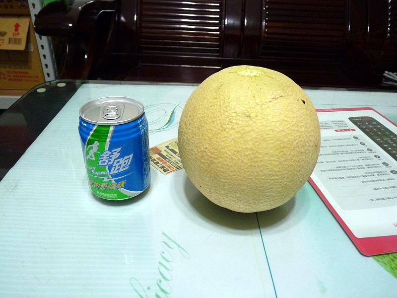 第二次種洋香瓜