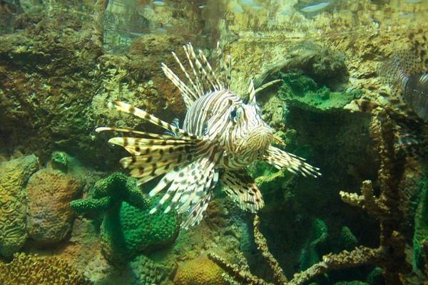 0605 bike 獅子魚