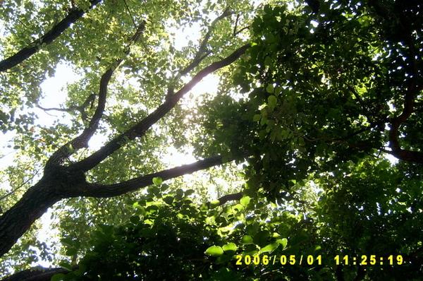 系館中庭的樹蔭