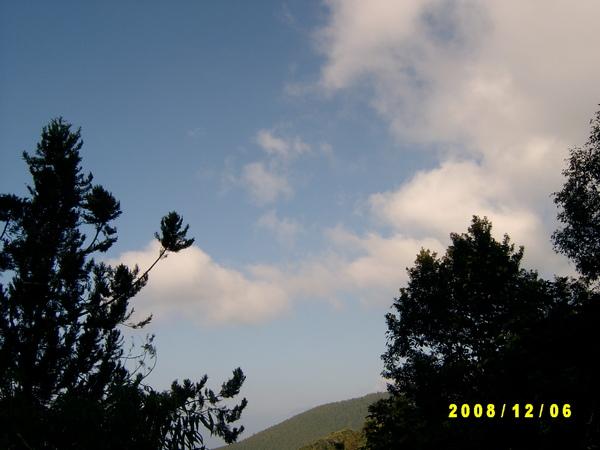 081201-藤枝-藍天白雲綠林好漢.JPG