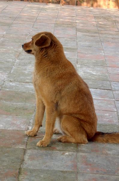 090102-梅山-犬.JPG