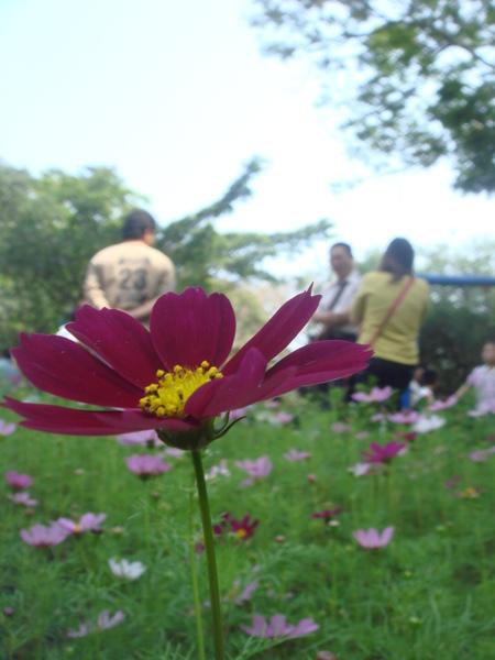 090308-府城花展-台南公園.JPG